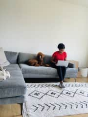 Working from home with Stevie in Los Angeles, CA.