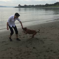Soda loves the beach and chasing sticks