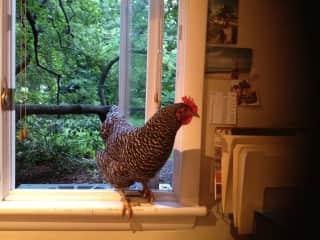 Omi . . visiting Merrit in her office!