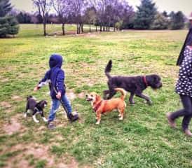 My kids love dog walking