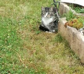 Mitya in the garden