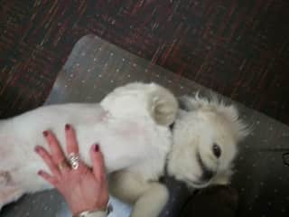 Me cuddling with a colleague's dog (2014)