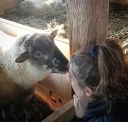 Sadie the sheep is a human whisperer