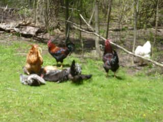 The girls sunning, the boys guarding them!