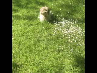 Poppet in the daisies June 2021