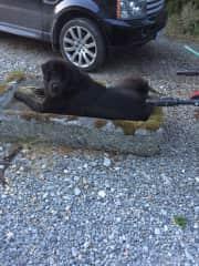 Hudson Finding A Cool Spot