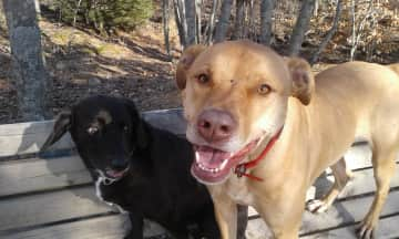 Tobie the brown dog with neighbour Cindy, short for Cinnamon