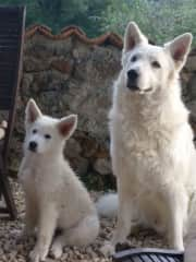 My brother's Swiss shepherd dogs Storm & Loki who live next door who know us very well !