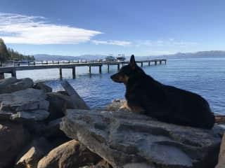 Moxie at Tahoe