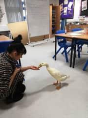 Me feeding Gladriel ( A teachers pet)