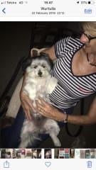 Beautiful Bailey looks more like a bear than a dog!