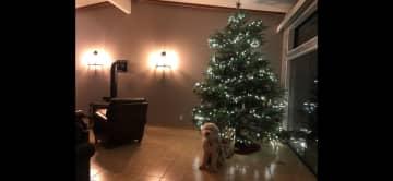 Sunken living room at Christmas time