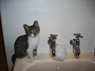 Roxy sharing a bath