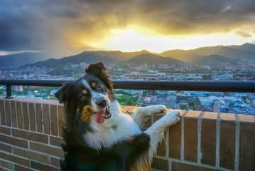Marty enjoying Medellin Sunset