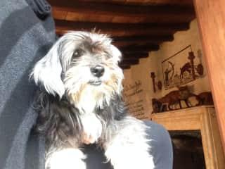 Jenn and Katie (Jenn's 16 yr old lap dog in France)