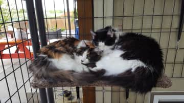 Milo & Trixie cuddling
