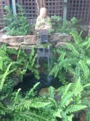 Fish pond in fern garden