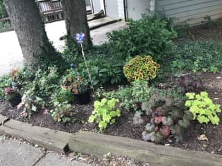 My own plant bed at my home