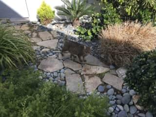 Hissy in her Zen garden