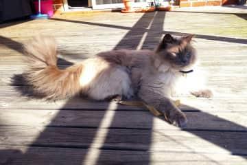 Liminal cat