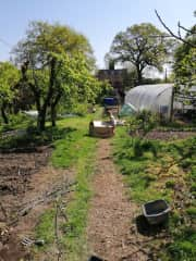 Showing a view down the garden towards the house with part of the veh garden and the polytunnel