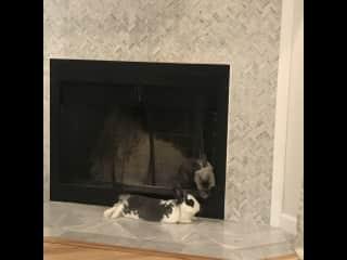 "Fireplace = rabbit ""condo"" :)"