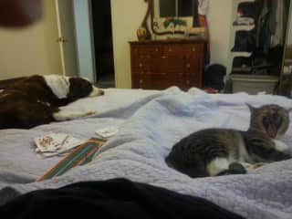mocha and CJ loved to share our bed!!
