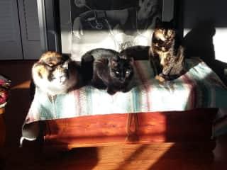 Celeste, Boris, Aurora