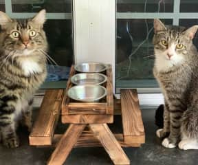 Dixie and Tucket eat their meals at a shared picnic table out back.