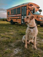 One of the many dogs I've befriended on the road. My skoolie is a short bus that easily fits in most driveways.