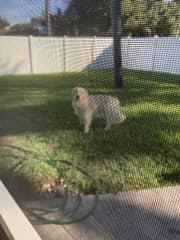 Oliver housesitting a Florida home