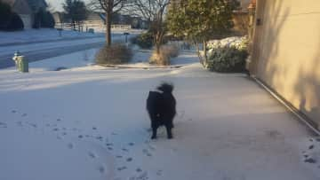 Thai playing in the Texas snow