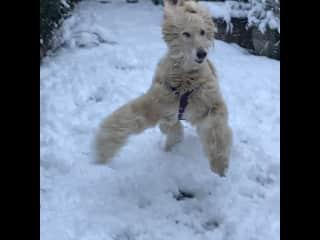 Danyal enjoys the snow