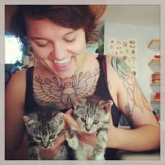 Rescue Kitties -- Santa and Hops!