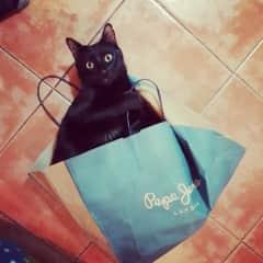 Bruce loves bags