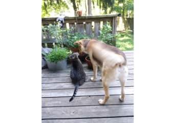 Ziggy and Skitten (the kitten!) having a moment, August 2019
