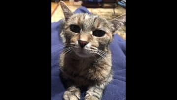 Katherine, my kitty.
