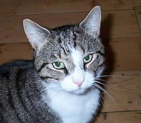 Pippin, a previous rescue cat