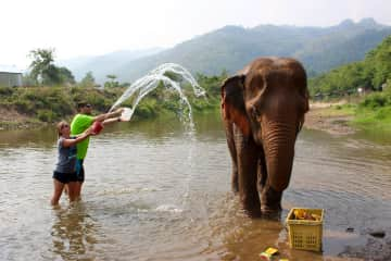 Volunteering at Elephant Nature Park, Thailand. A great place helping elephants live a better life.