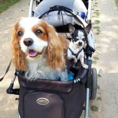 Happy customers, we sell among other pet products -dog strollers online