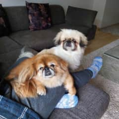 We didnt get the memo that our laps needed to cater for 2 puppues at once! (Bucharest, Romania)