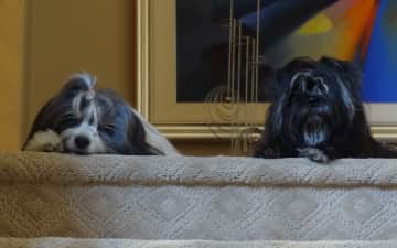 Izzy on the left and Winky on the right