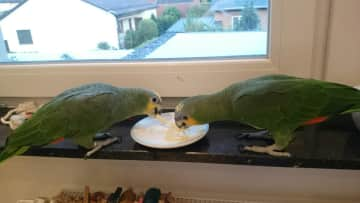 Lilly and Dino enjoying pasta.
