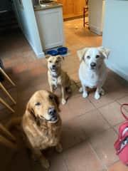 The three amigos in quarantine!