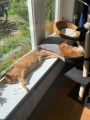 Ziggy & Mav enjoying the sunshine