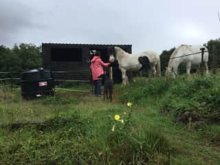Feeding Bob and his friend during our Ireland housesit