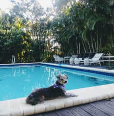 Bentley at the pool