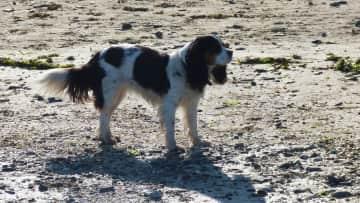 Molly on the beach