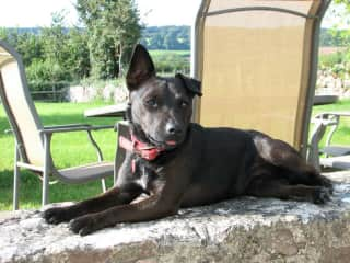 Rosie our 9 year old Patterdale Terrier