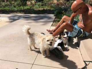 these dogs we were told would be lost without the owner being home ... it didn't seem so !!